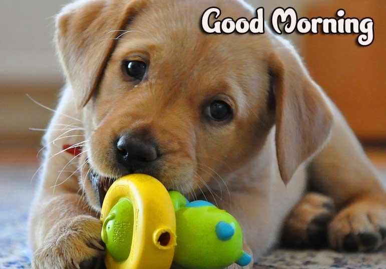 Dog Free Animal Bird Lion Good Morning Wishes Pics Download