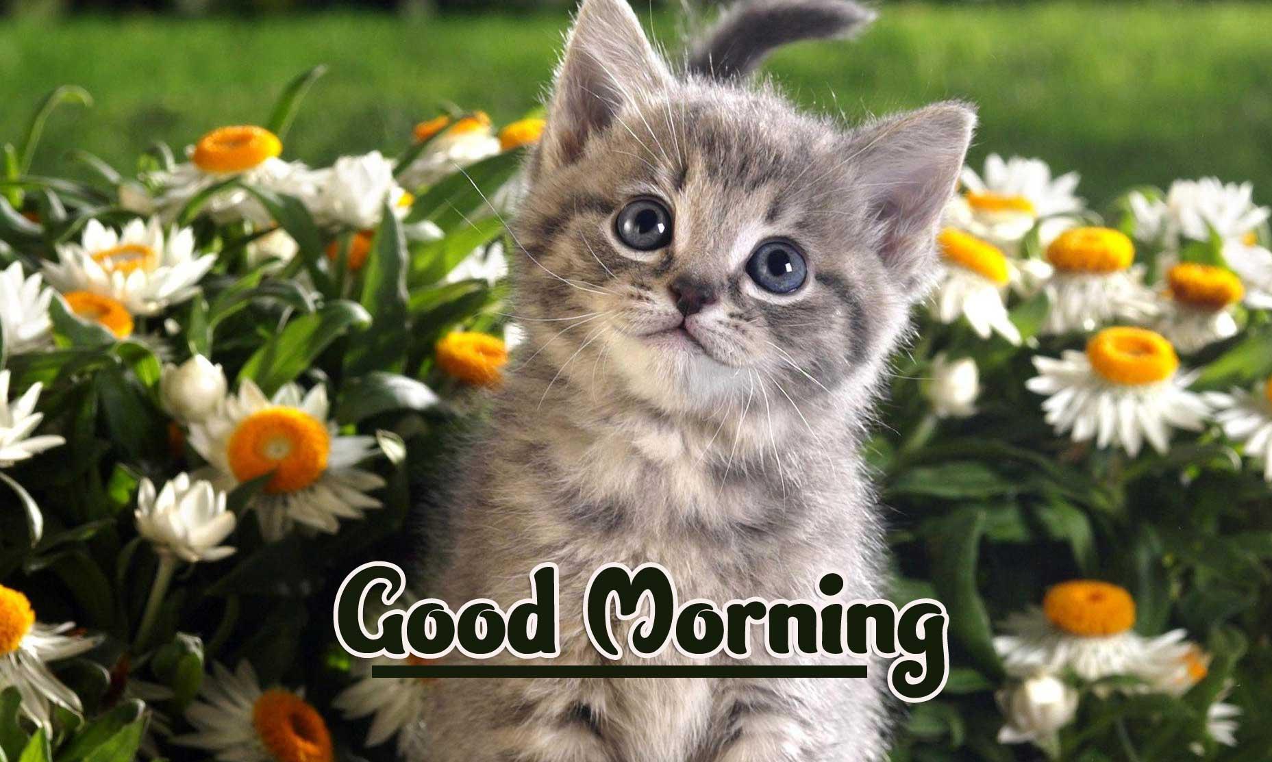 Best Free Animal Bird Lion Good Morning Wishes Pics Download