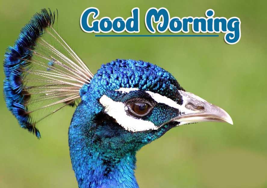 Animal Bird Lion Good Morning Wishes Pics Free Download