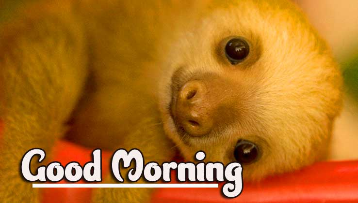 Animal Bird Lion Good Morning Wishes Pics Wallpaper for Facebook
