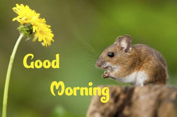 Animal Bird Lion Good Morning Wishes pics Download