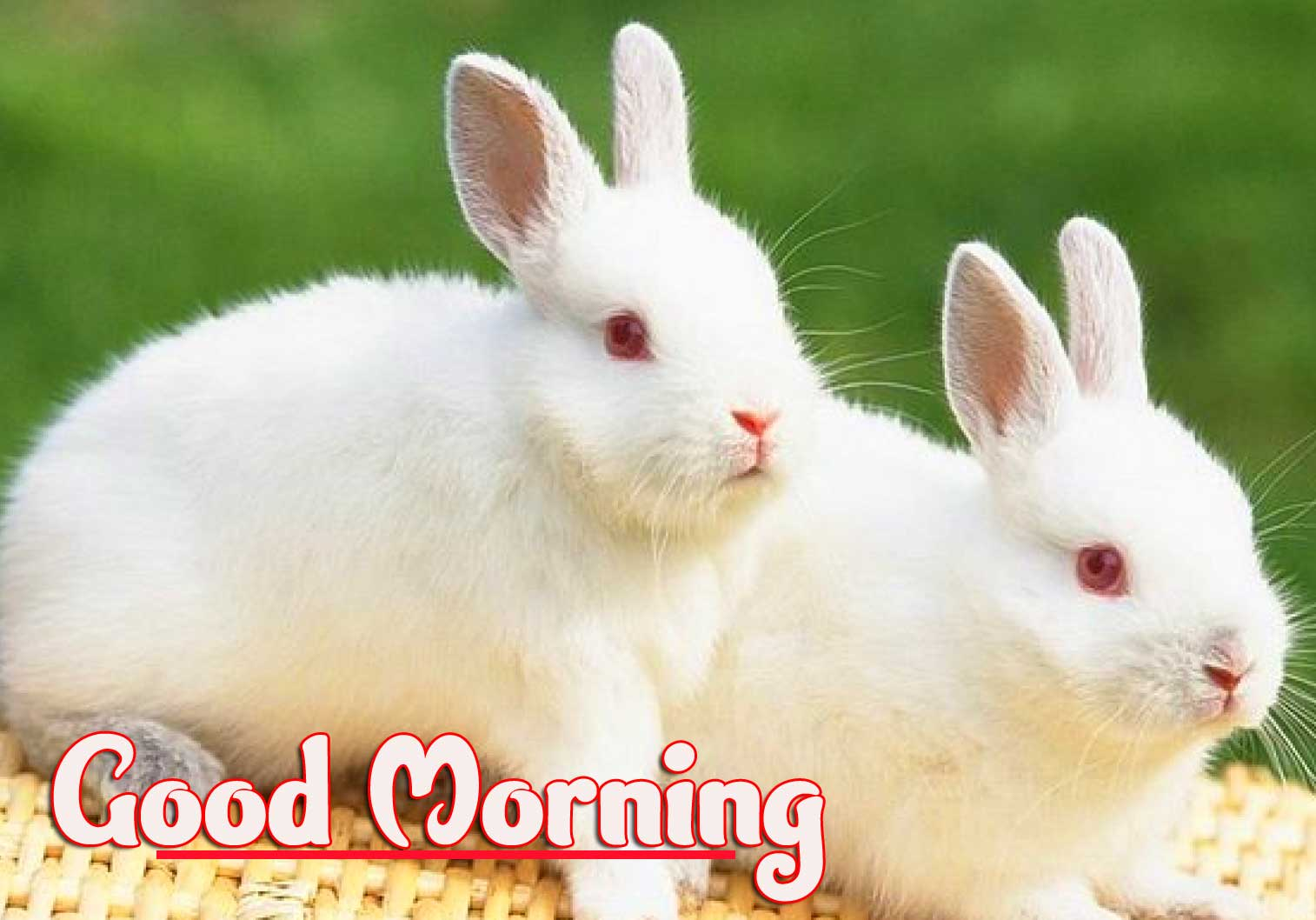 Animal Bird Lion Good Morning Wishes Pics Wallpaper for Whatsapp