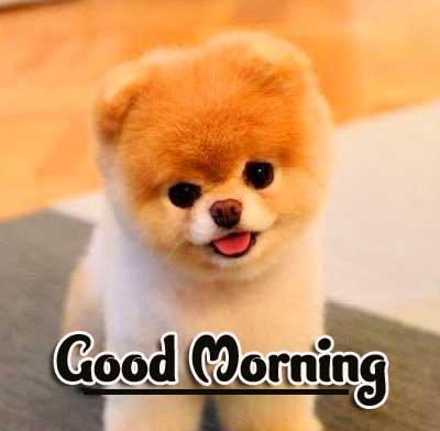 Animal Bird Lion Good Morning Wishes Pics Latest Download