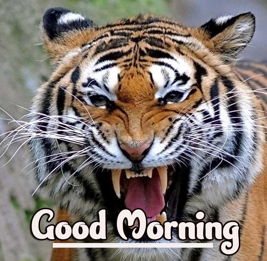 Animal Bird Lion Good Morning Wishes Pics Free Downwards