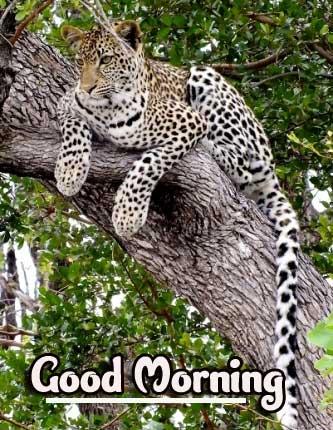 free Best Animal Bird Lion Good Morning Wishes Pics Download