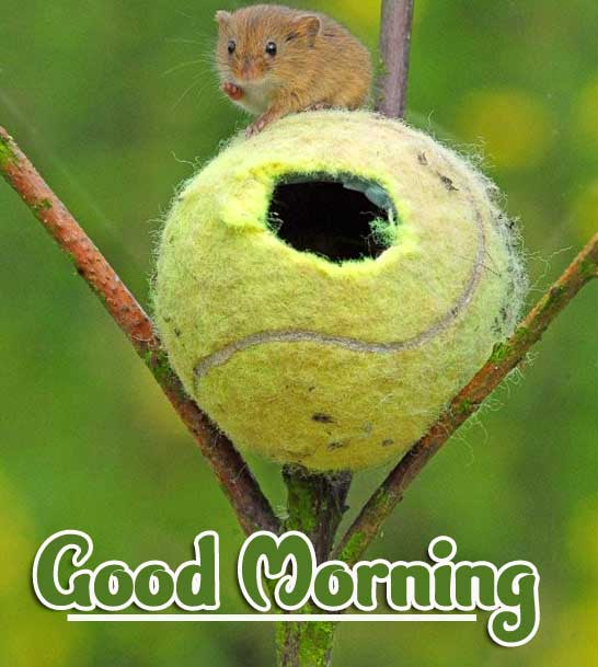 Animal Bird Lion Good Morning Wishes Pics Free for Facebook