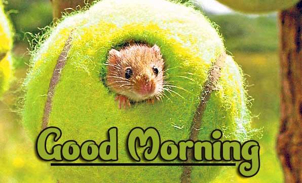 Animal Bird Lion Good Morning Wishes Pics Wallpaper free Download