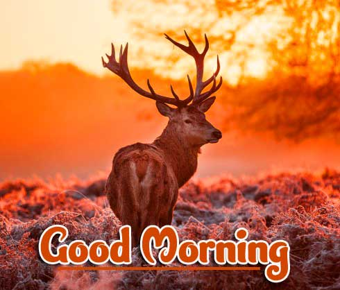 For Facebook best Animal Bird Lion Good Morning Wishes Pic Download