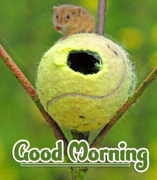 Animal Bird Lion Good Morning Wishes Pics Free for Friend