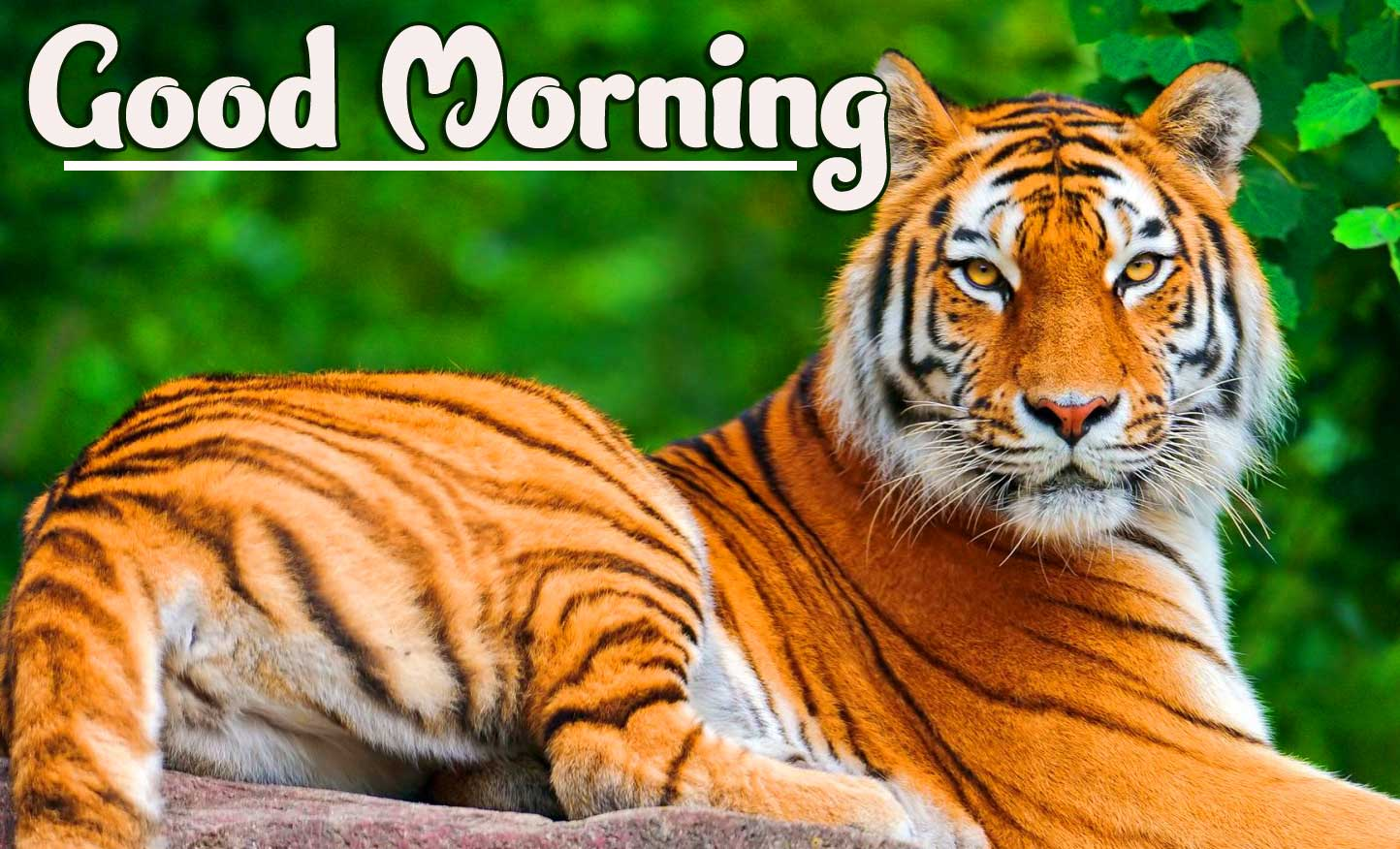 Animal Bird Lion Good Morning Wishes Wallpaper Latest Download Free