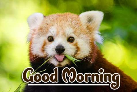 Animal Bird Lion Good Morning Wishes Pics Wallpaper Download free