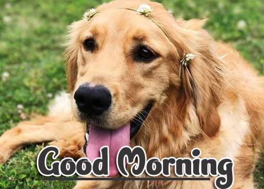 Animal Bird Lion Good Morning Wishes Wallpaper pics Download