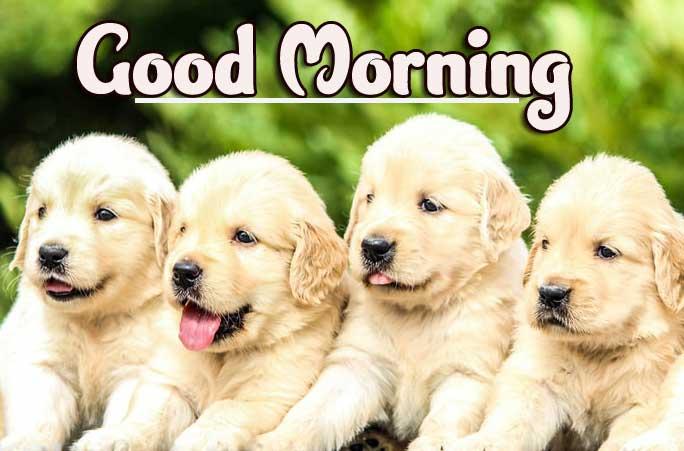 Animal Bird Lion Good Morning Wishes Photo Free Download