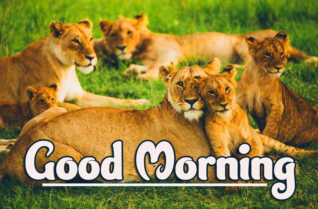 Animal Bird Lion Good Morning Wishes Pics Wallpaper Download