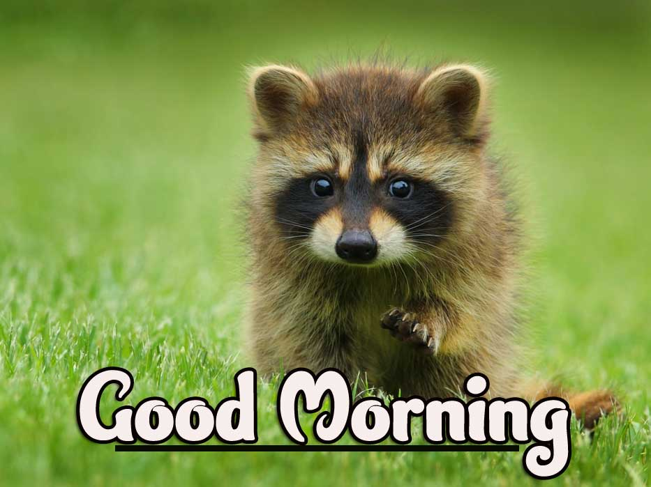 Animal Bird Lion Good Morning Wishes Wallpaper for Whatsapp