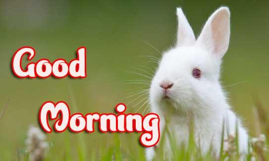 Animal Bird Lion Good Morning Wishes Pic Wallpaper free Download