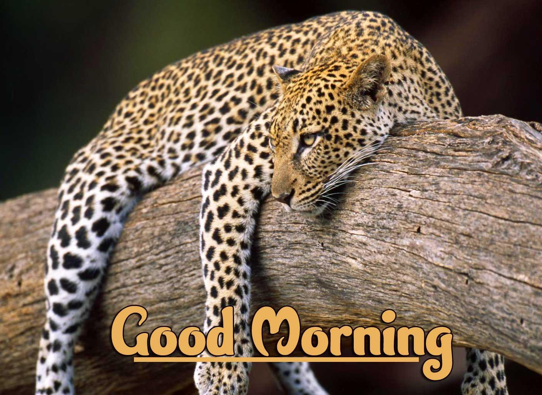 Animal Bird Lion Good Morning Wishes Pics Free Download Free Latest