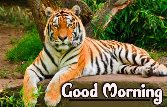 New All Best Animal Bird Lion Good Morning Wishes Pics Download