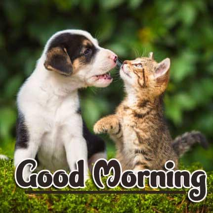 Animal Bird Lion Good Morning Wishes Pics Download Free