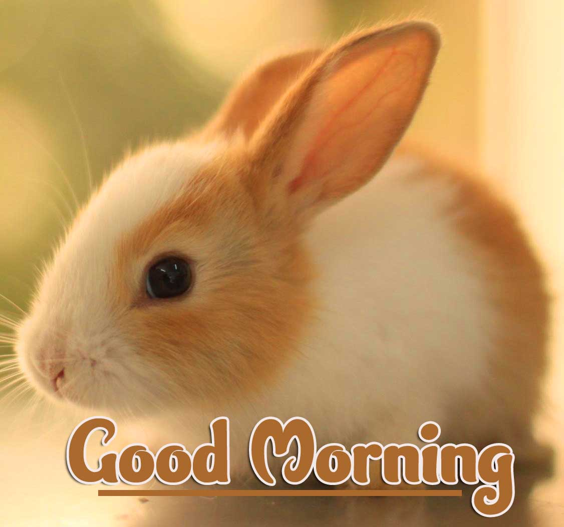 New Top Free Animal Bird Lion Good Morning Wishes Pics Download Free