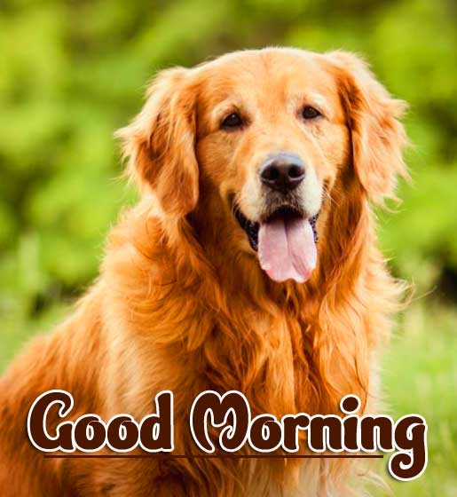 Cute Puppy Animal Bird Lion Good Morning Wishes Pics Download free