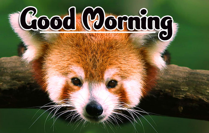 Animal Good morning Wishes Images Pic Download