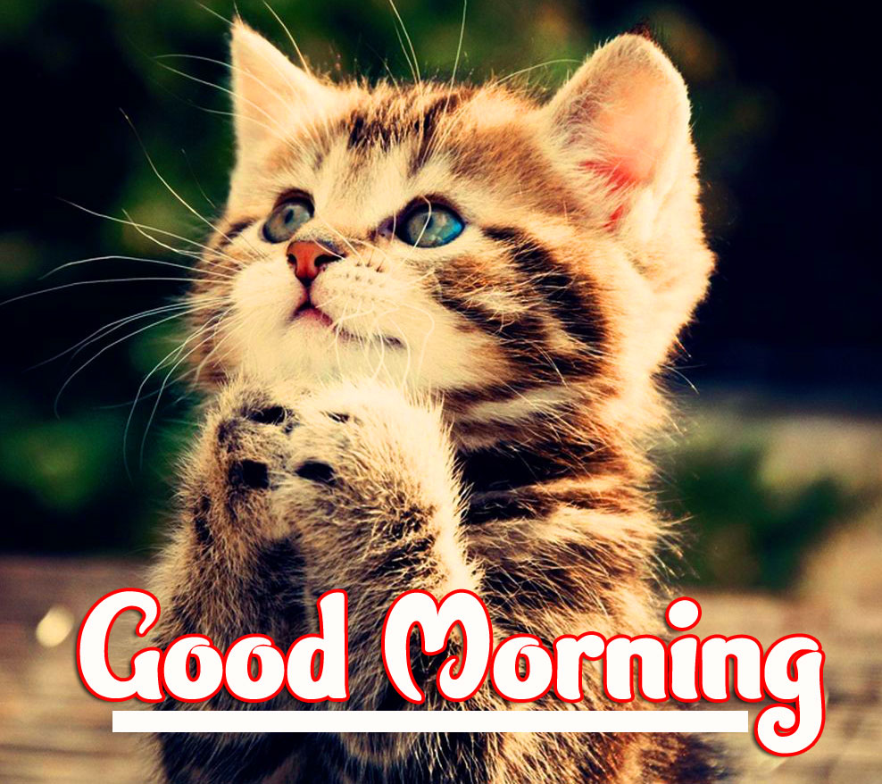 Animal Good morning Wishes Pics photo Download