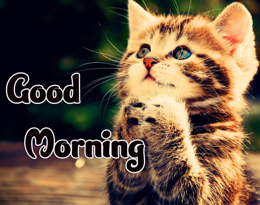 Cat Free Animal Good morning Wishes Pics Wallpaper Download