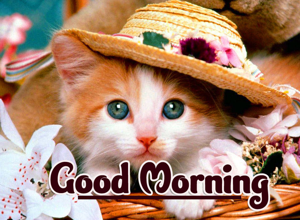 Animal Good morning Wishes Wallpaper Photo Free Download