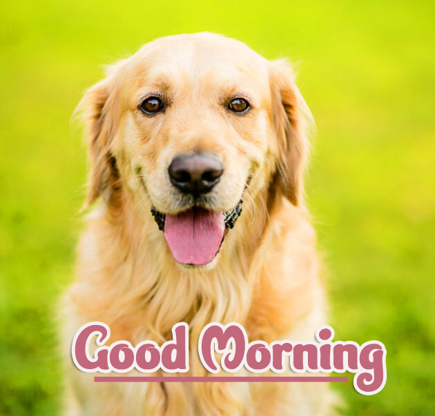 Animal Good morning Wishes pics Free Download