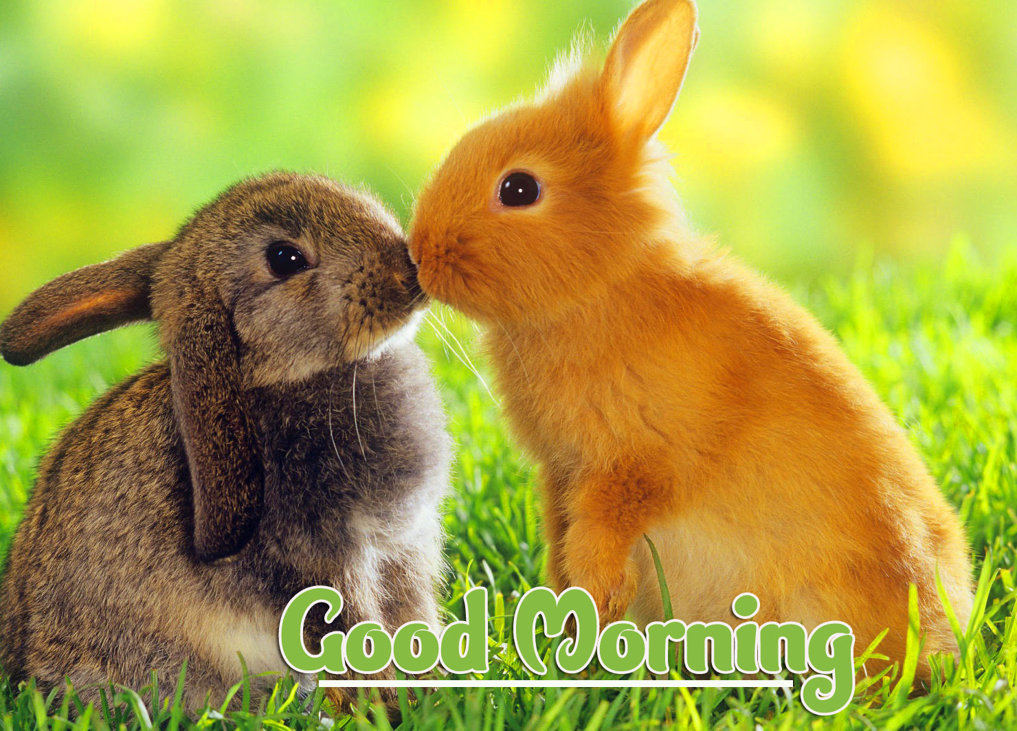 Latest Free Animal Good morning Wishes Pics Images Download