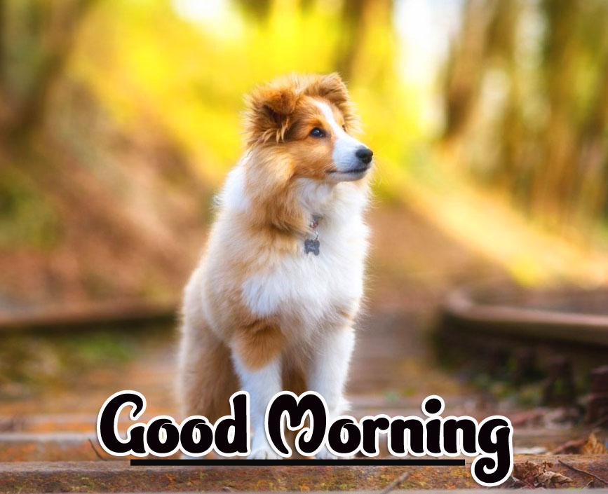 Animal Good morning Wishes Pics Images Download