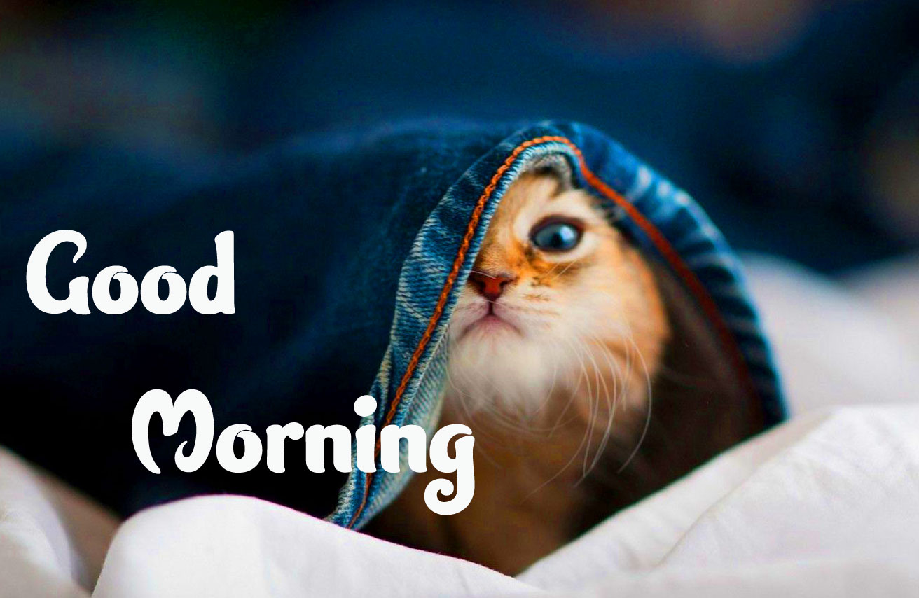 Animal Good morning Wishes Images Photo Download