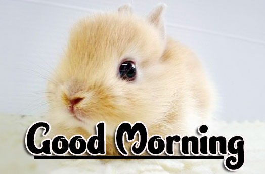 Animal Good morning Wishes Pics Wallpaper Download
