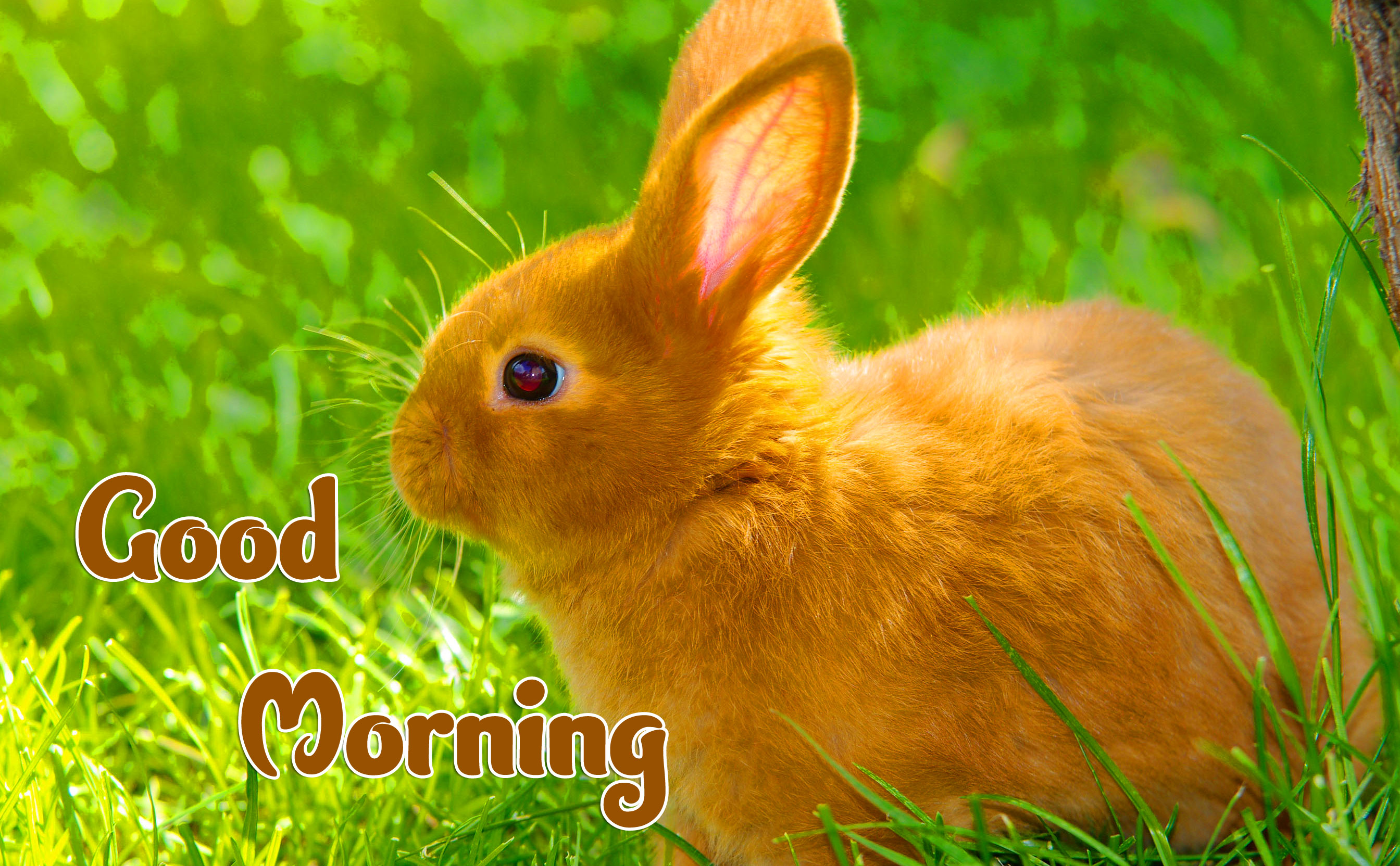 Animal Good morning Wishes Wallpaper pics Free Download