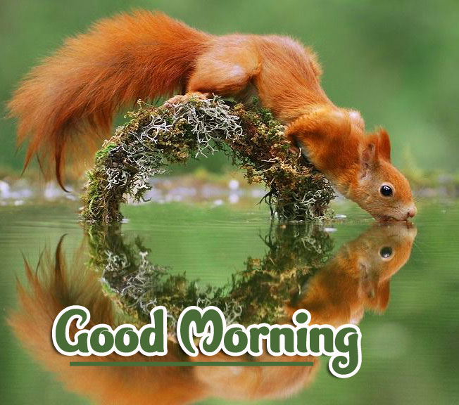 Animal Good morning Wishes Photo Wallpaper Download