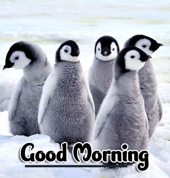 Animal Good morning Wishes Pics Wallpaper Free Download