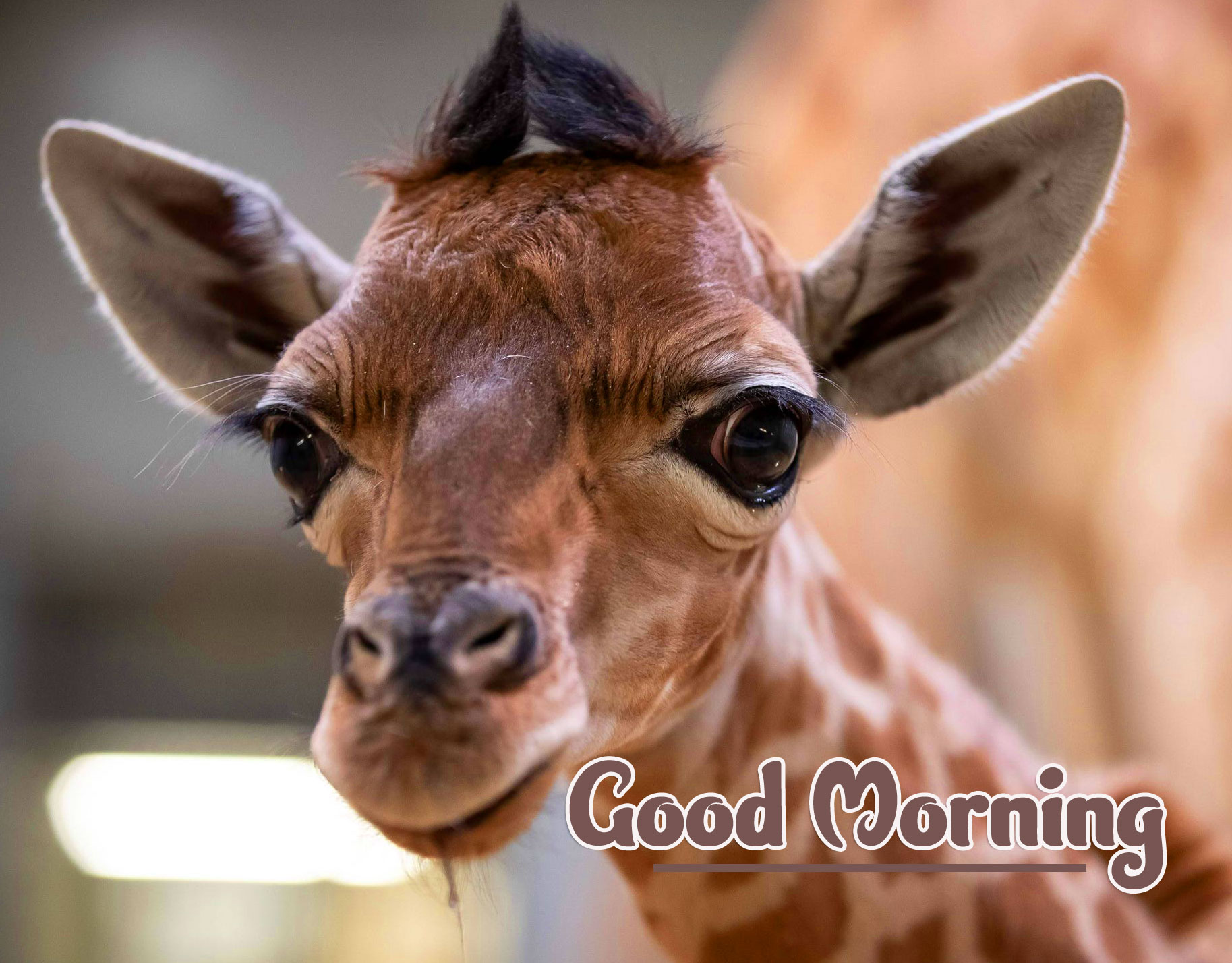 Animal Good morning Wishes Wallpaper pics Download