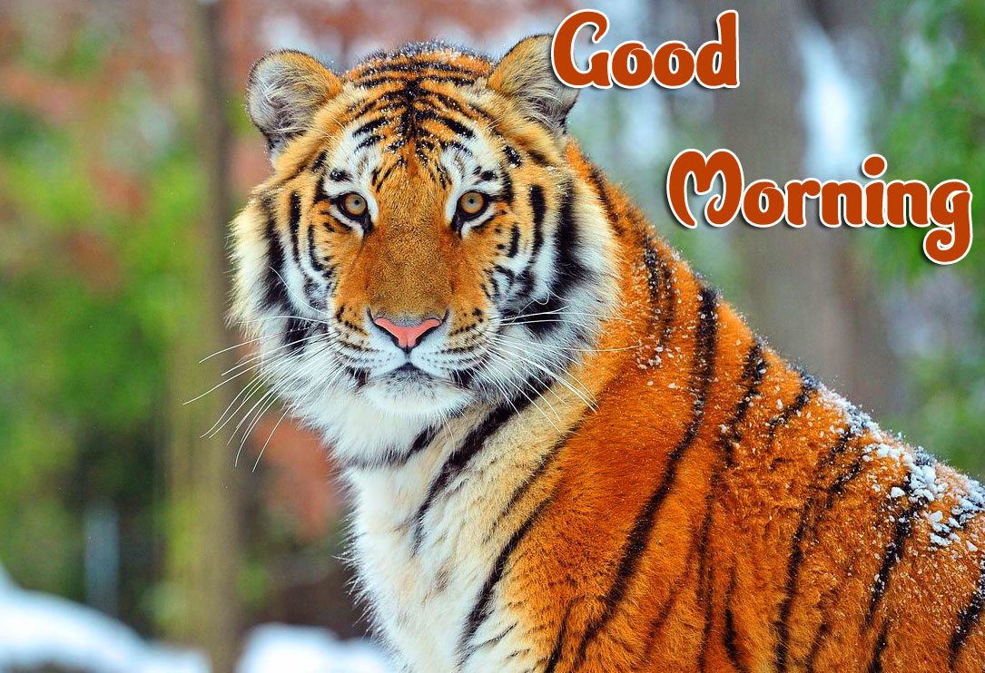 Animal Good morning Wishes Wallpaper Free Download