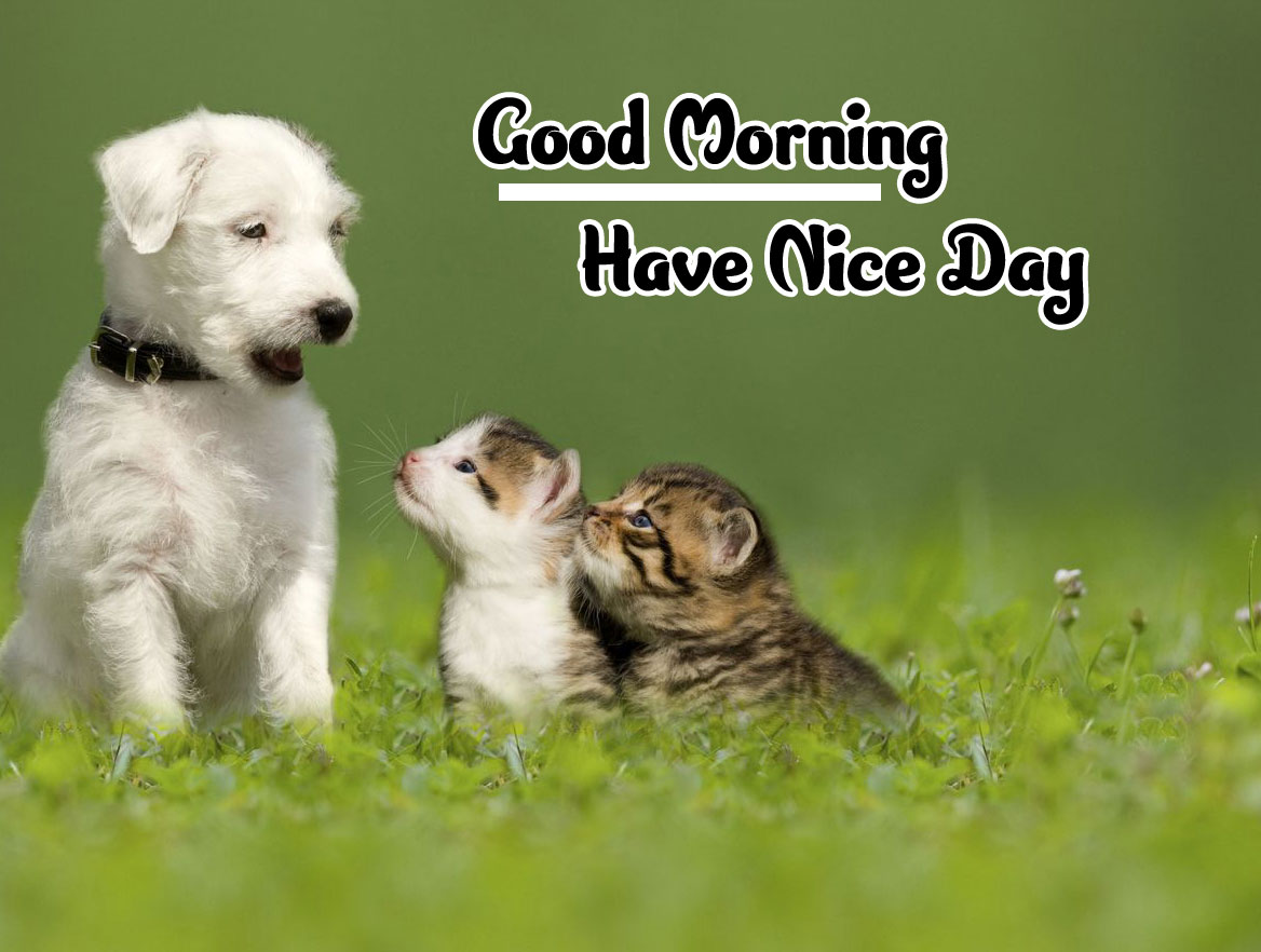 Cute Animal Good morning Wishes pics Wallpaper Download