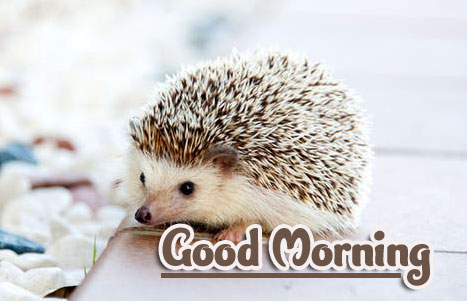 Animal Good morning Wishes Wallpaper Pics HD Download