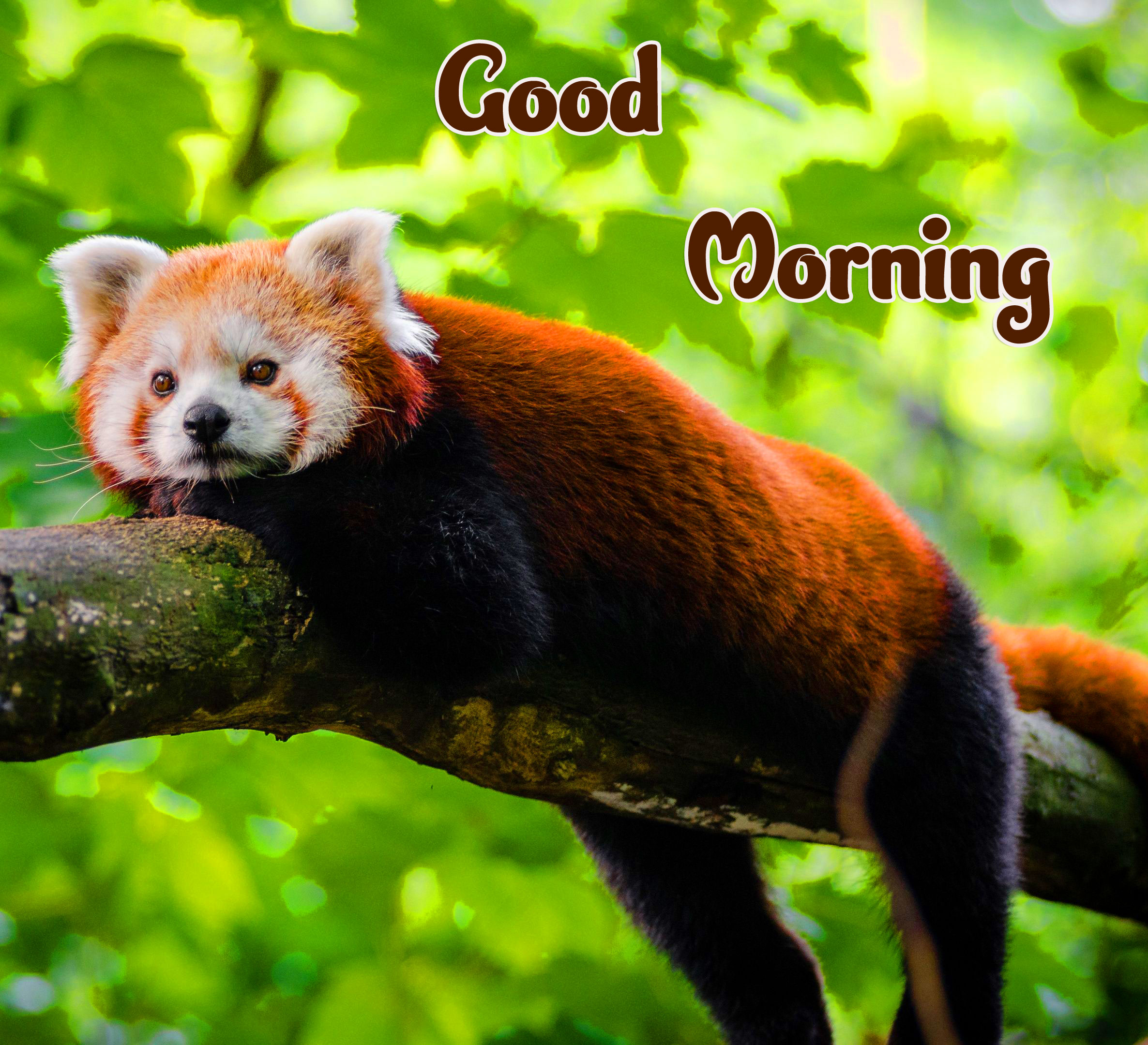 Animal Good morning Wishes photo Free Download