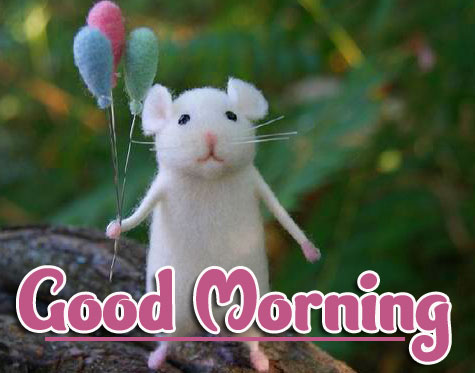 Funny Animal Good morning Wishes Pics Images Download