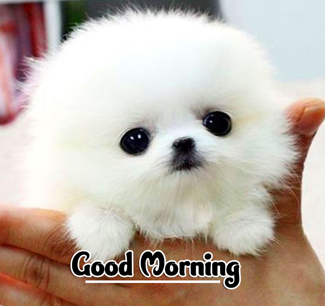 Cute Puppy Animal Good morning Wishes Pics Images Download