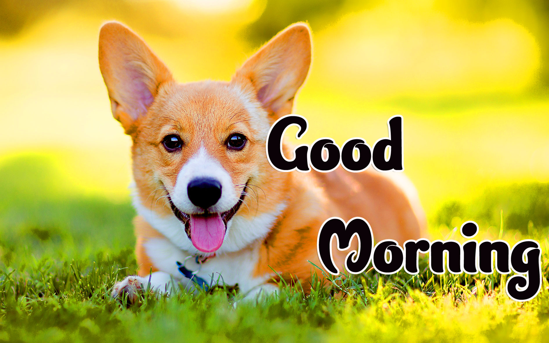 Animal Good morning Wishes Wallpaper for Whatsapp