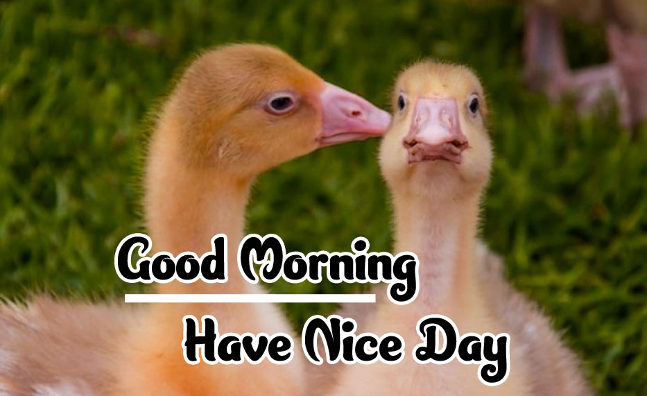 Animal Good morning Wishes Images Wallpaper Free Download