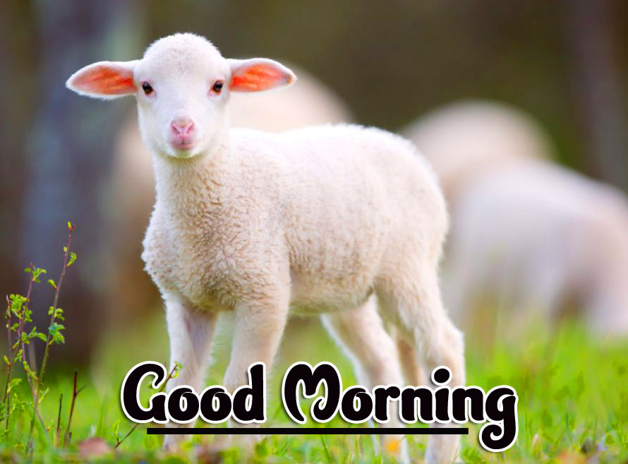 Animal Good morning Wishes Images Wallpaper Pics Download