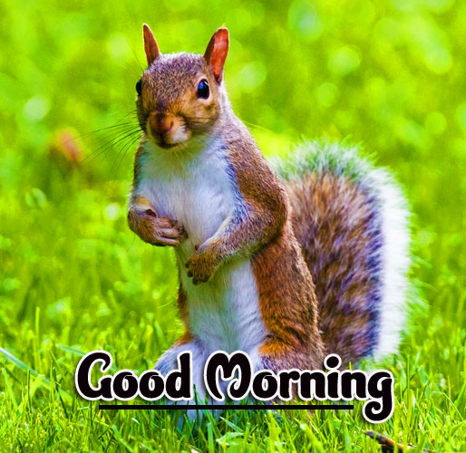 Animal Good morning Wishes Images photo Free Download