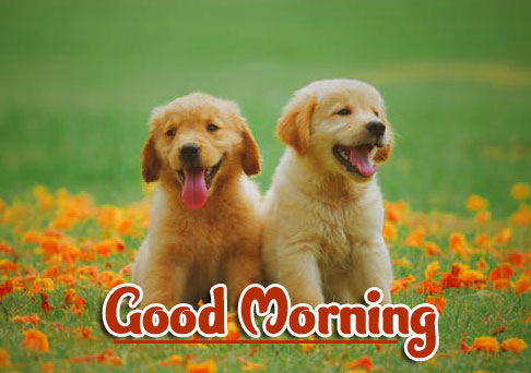 Animal Good morning Wishes Images Pics Free Download