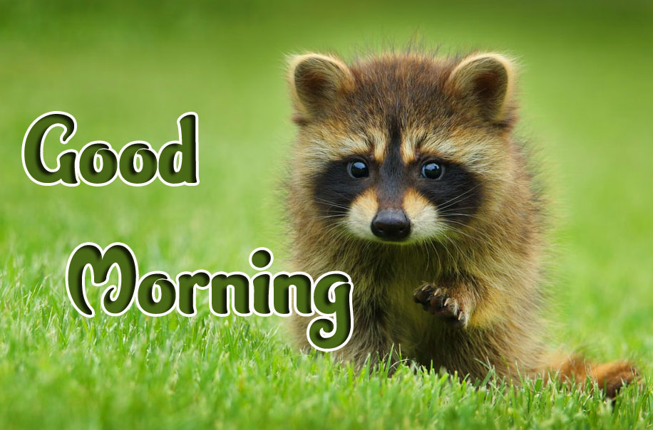 Animal Good morning Wishes Images Pics HD Download